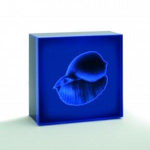 DE MITRI Azzurra II, 2006